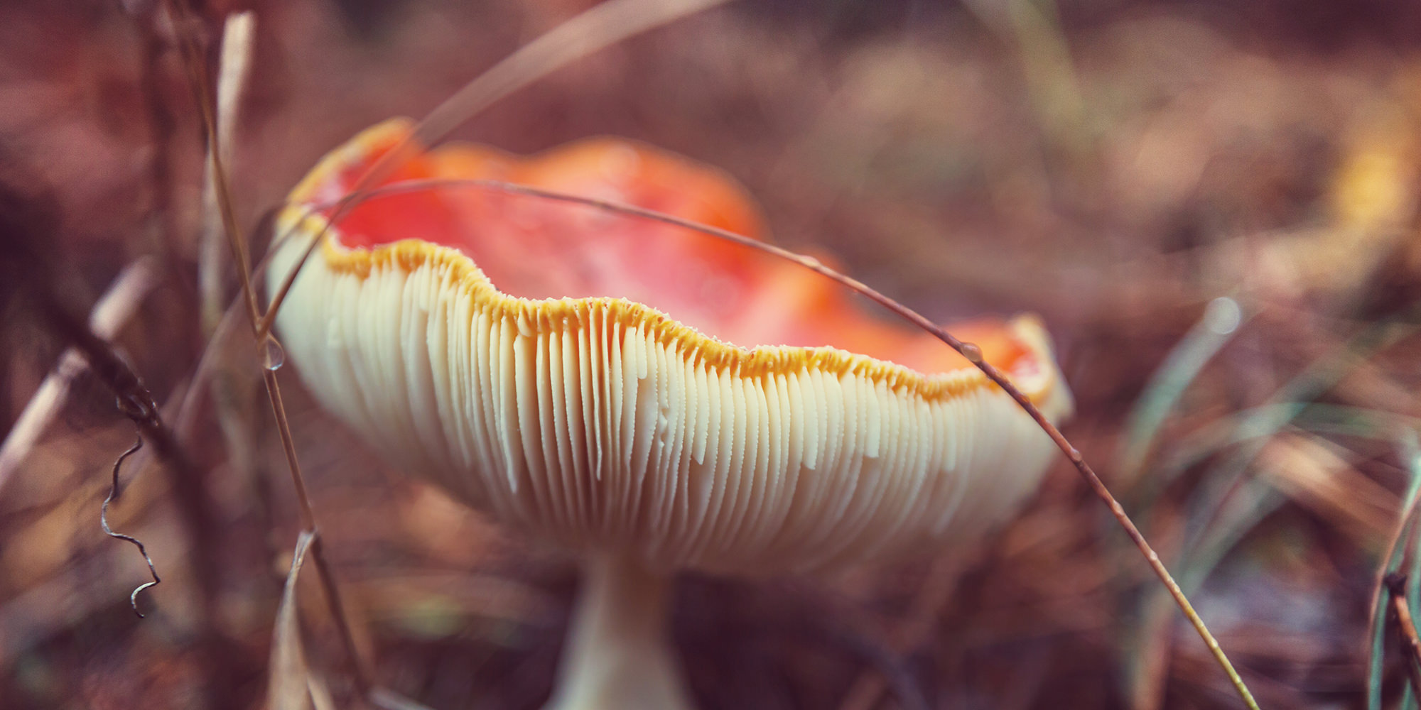 Harness the Immune Boosting Power of Mushrooms with AHCC | AOR