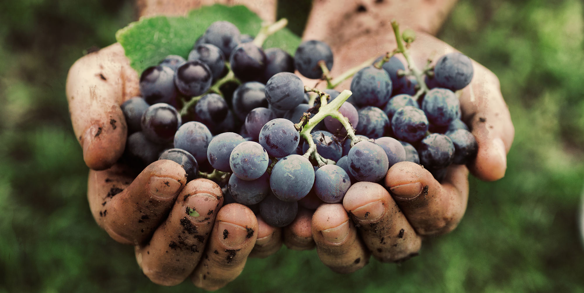 Antioxidants Part I: What is the Value of